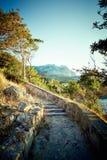 Drzewo i morze przy zmierzchem błękitny Crimea wzgórzy krajobrazu nagi niebo Zdjęcie Royalty Free