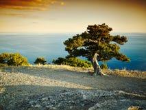 Drzewo i morze przy zmierzchem błękitny Crimea wzgórzy krajobrazu nagi niebo Obraz Stock