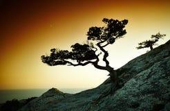 Drzewo i morze przy zmierzchem błękitny Crimea wzgórzy krajobrazu nagi niebo obrazy royalty free