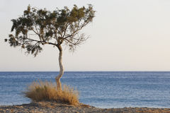 Drzewo i morze śródziemnomorskie przy zmierzchem w Plakias crete Grecja Obraz Royalty Free