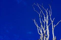 Drzewo i niebieskie niebo dla tła Obraz Royalty Free