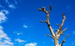 Drzewo i niebieskie niebo dla tła Obraz Stock