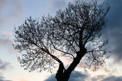 Drzewo i niebo Fotografia Stock