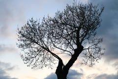 Drzewo i niebo Obraz Royalty Free