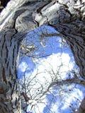 Drzewo i niebo fotografia royalty free