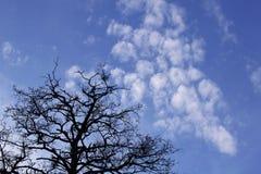 Drzewo i niebo Zdjęcia Royalty Free