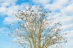 Drzewo i niebo Zdjęcie Stock