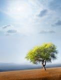 Drzewo i niebo Zdjęcia Stock