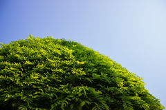 Drzewo i niebo Obraz Stock