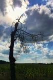 Drzewo i niebo Obrazy Stock