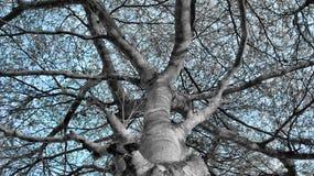 Drzewo i niebo Zdjęcie Royalty Free