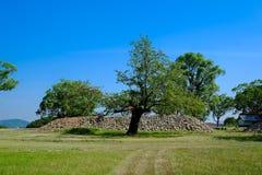 Drzewo i niebo Obrazy Royalty Free