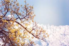 Drzewo i niebo w wsi Fotografia Stock