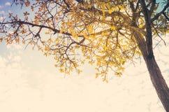 Drzewo i niebo w wsi Zdjęcie Royalty Free