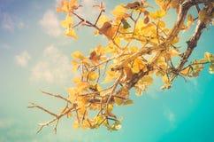 Drzewo i niebo w wsi Zdjęcie Stock