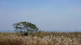Drzewo i płochy Fotografia Stock