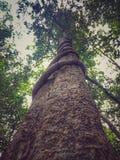 Drzewo i śpioszek Obraz Stock