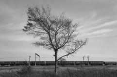 Drzewo i pociąg bw zdjęcie royalty free