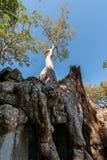 Drzewo i ruina Fotografia Royalty Free