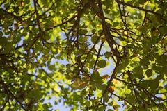 Drzewo i Słońce Zdjęcia Stock