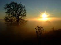Drzewo i słońce Zdjęcia Royalty Free