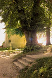 Drzewo i schodki Zdjęcie Royalty Free