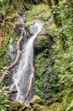 Drzewo i siklawa zdjęcie royalty free