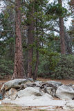 Drzewo i skały Obrazy Royalty Free