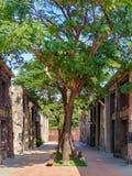Drzewo i sklepy fotografia stock