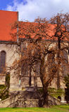 Drzewo i stary budynek Obrazy Royalty Free