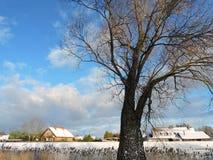Drzewo i stwarza ognisko domowe blisko rzeki Obrazy Royalty Free