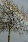 Drzewo i tęcza Zdjęcia Royalty Free