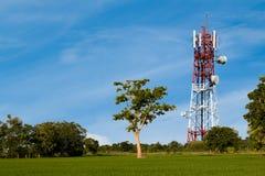 Drzewo i telekomunikacj wierza w ryżu polu fotografia royalty free