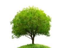 Drzewo i trawa odizolowywający obrazy stock