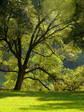 drzewo i trawa target394_0_ światło słoneczne obraz stock