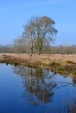 Drzewo i woda. Obraz Royalty Free