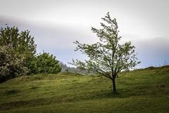 Drzewo i wrona zdjęcie royalty free