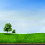 Drzewo i zieleni pole z drogą i niebieskim niebem Fotografia Royalty Free