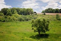 Drzewo i ziemia uprawna krajobraz Zdjęcie Royalty Free