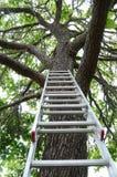 drzewo idzie drabina drzewo zdjęcie royalty free