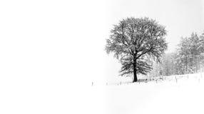 Drzewo II i zima Obrazy Stock
