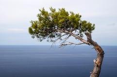 Drzewo ja morze Zdjęcia Stock