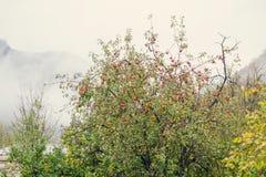 drzewo jabłczany piękny ilustracyjny wektor zdjęcie royalty free