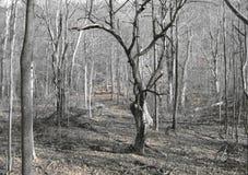 drzewo jabłczany piękny ilustracyjny wektor Obrazy Royalty Free