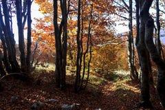 Drzewo jesień Zdjęcie Royalty Free