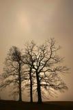 drzewo jest bagażnik. Obrazy Stock