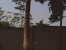 Drzewo jest w tylnym yeard obrazy royalty free