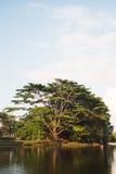 Drzewo jeziorem Obrazy Stock