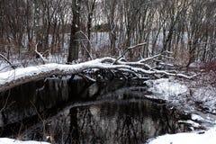 Drzewo kłaść puszek na rzece Obrazy Royalty Free