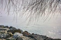 Drzewo, kamienie & mgłowy morze Fotografia Royalty Free